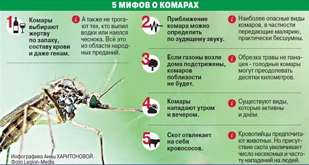 Почему комары пьют кровь и как они это делают