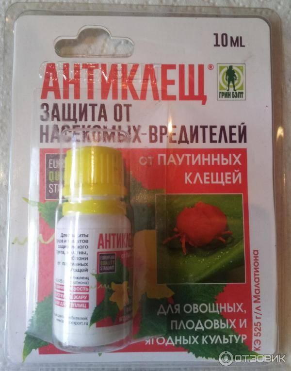Как избавиться от паутинного клеща на комнатных растениях: профилактика, химические средства и народные методы