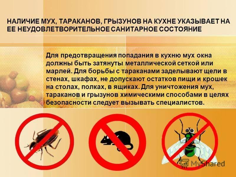 Средство Get (Гет) от тараканов: инструкция по применению и отзывы