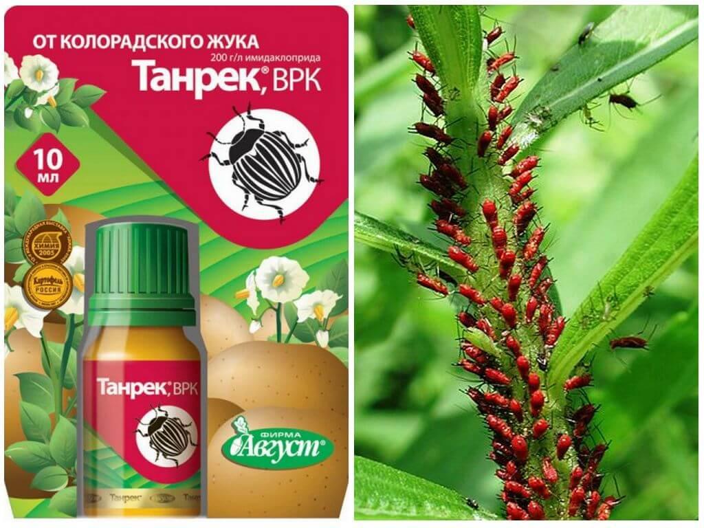 Инсектицид «биотлин» – защита от тли и белокрылки. инструкция по применению