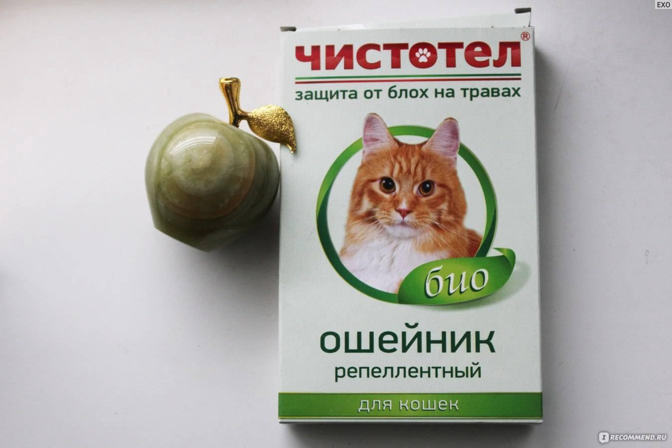 Обзор лучших средств против блох и глистов для кошек