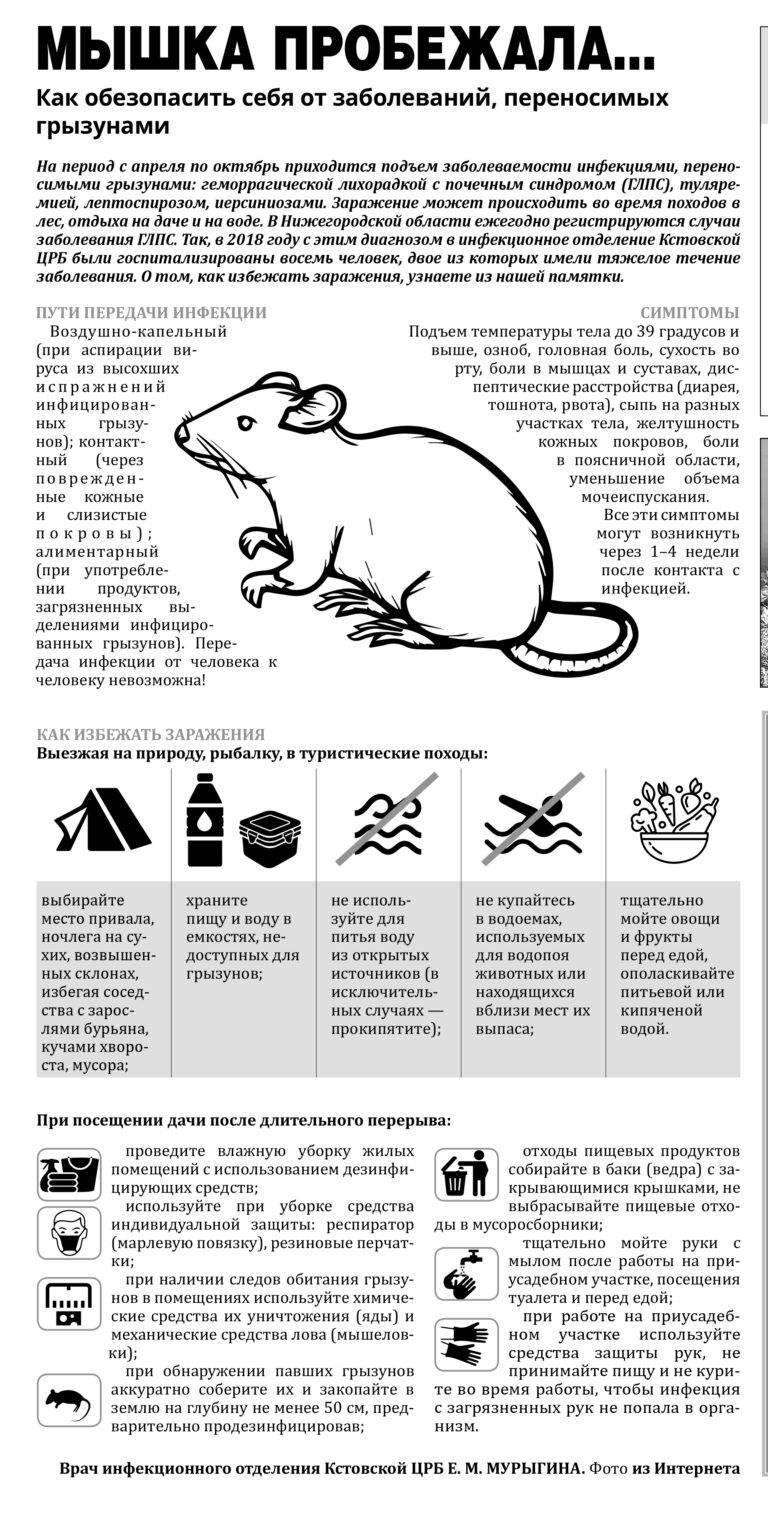 Болезни переносимые мышами и крысами что стоит о них знать