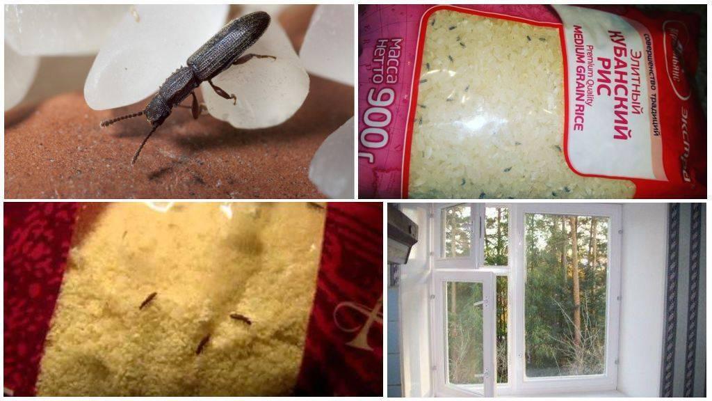 Как избавиться от мучных жучков навсегда в домашних условиях
