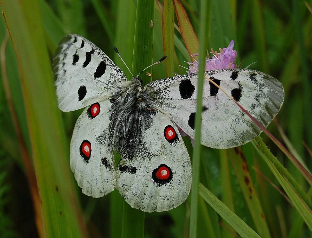 Как избавиться от бабочек и гусениц капустницы