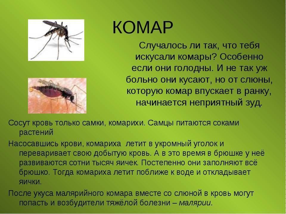 Из-за аномально теплой зимы в россии могут исчезнуть комары