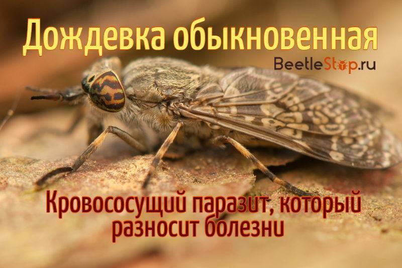 Животные паразиты (1)