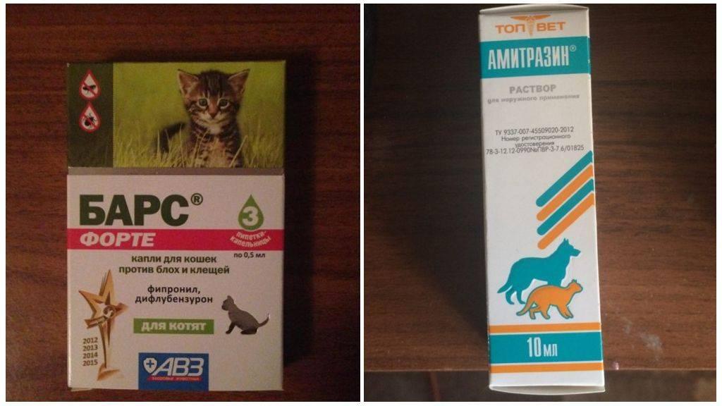 Капли от клещей для кошек - какие лучше выбрать?