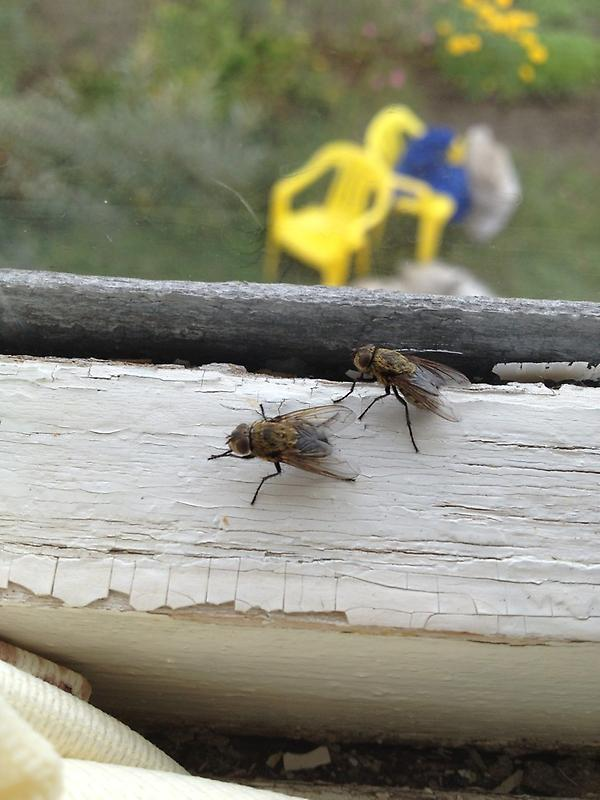 Как избавиться от мух на даче: эффективные средства