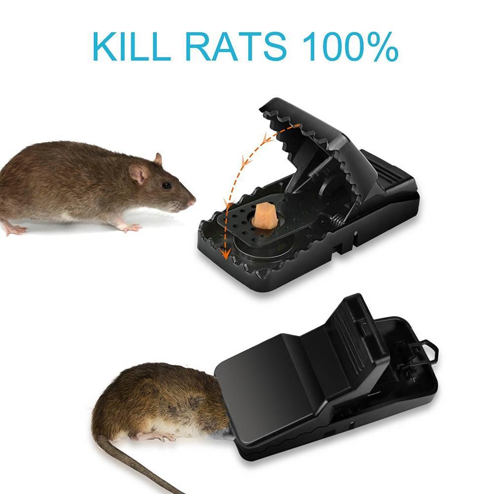 Как поймать крыс и мышей: ловушки и приманки для грызунов