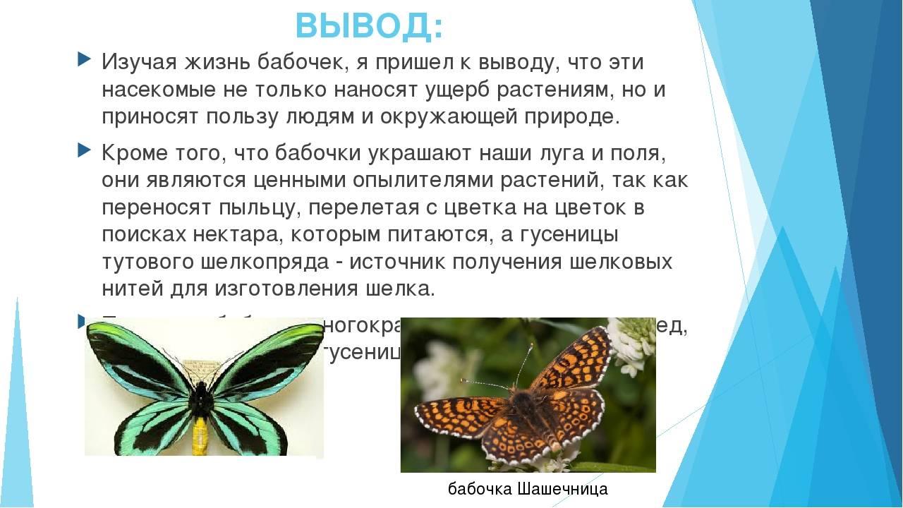 Как появляются бабочки: стадии развития