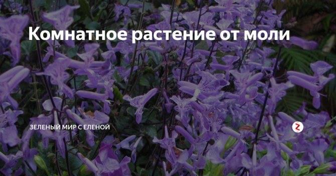 Растения, отпугивающие вредителей - моя дача - информационный сайт для дачников, садоводов и огородников