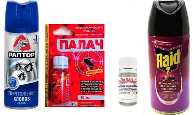 Раптор: аэрозоль, гель и аквафумигатор, как средство борьбы с постельными клопами