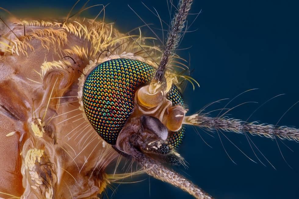 Сколько зубов у комара и есть ли они вообще