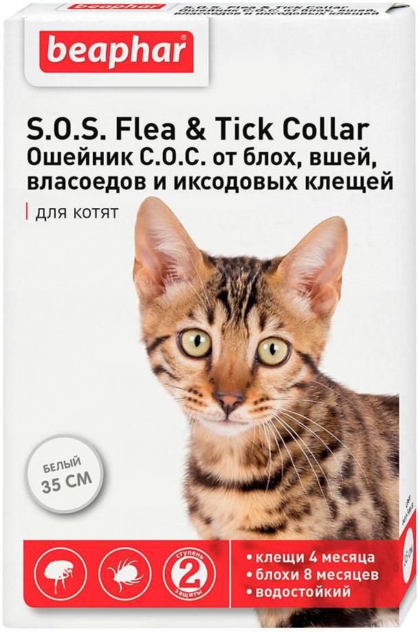 Ошейники для котят от блох - обзор и инструкция по применению