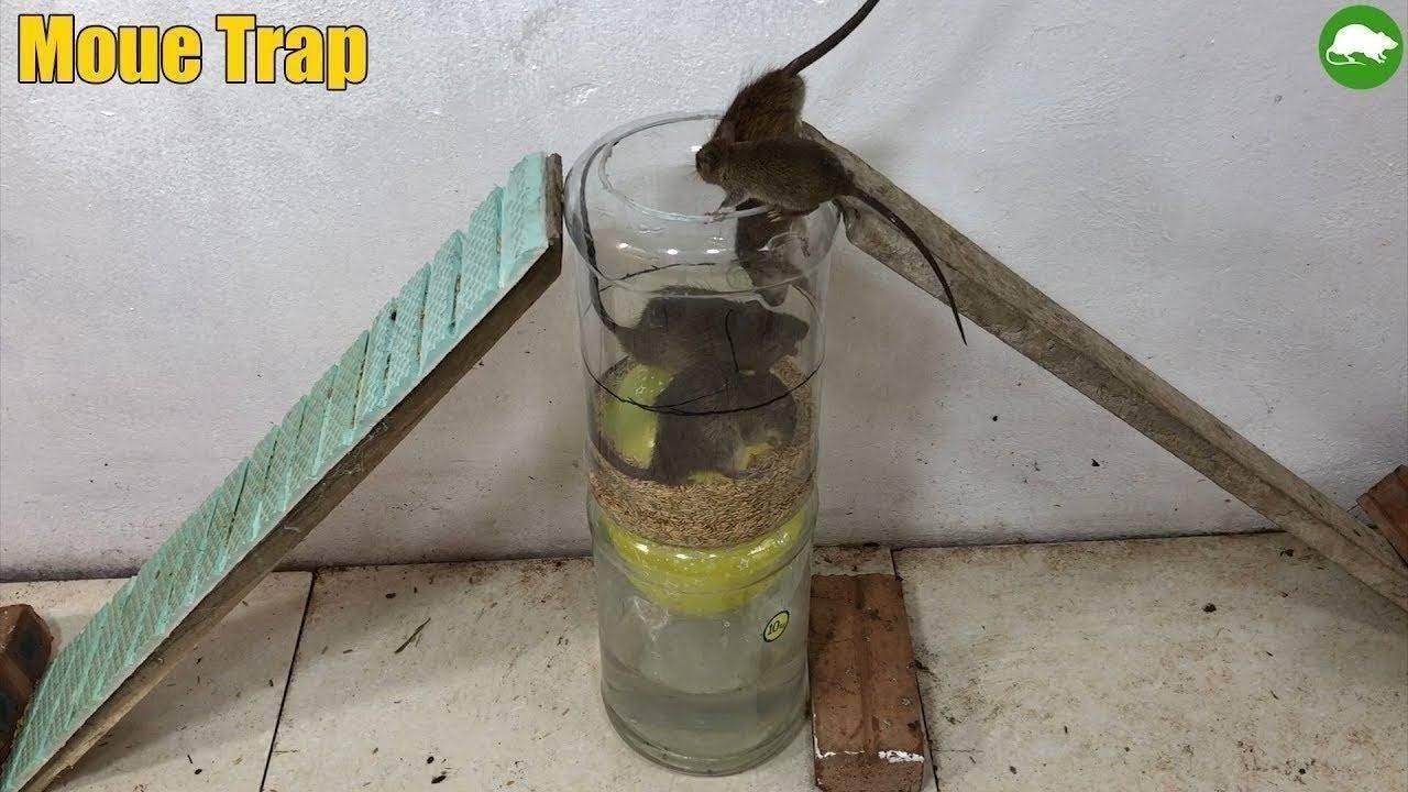 Мыши в квартире: что делать?!