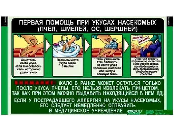 Укус пчелы: что делать, когда вас уже укусили. Первая помощь, препараты и домашние средства. И что делать категорически нельзя!
