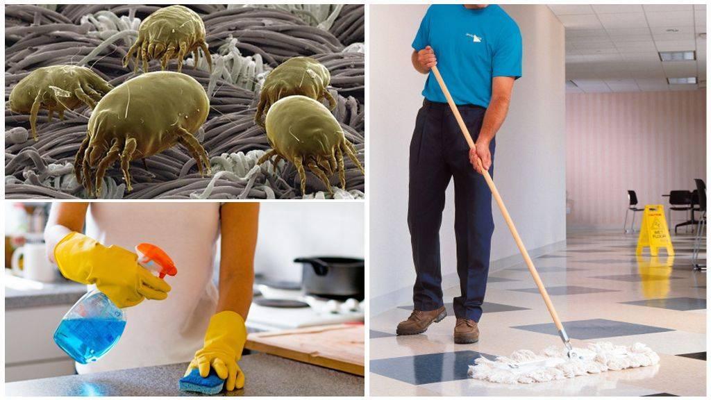 Как быстро вывести пылевых клещей: уборка, химические средства и народные методы