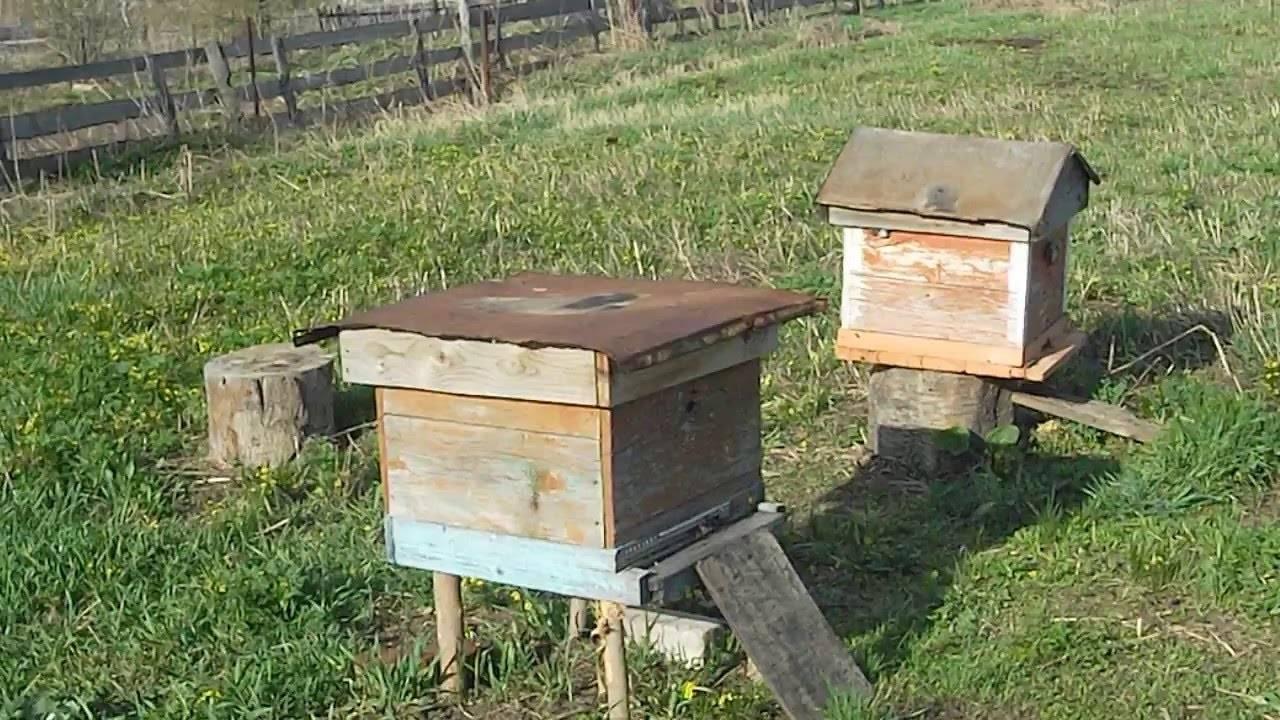 Бипин против клещей на пчелах: дозировка, применение