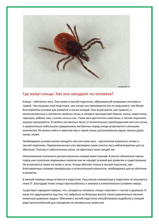 Где зимуют клещи — parazit24