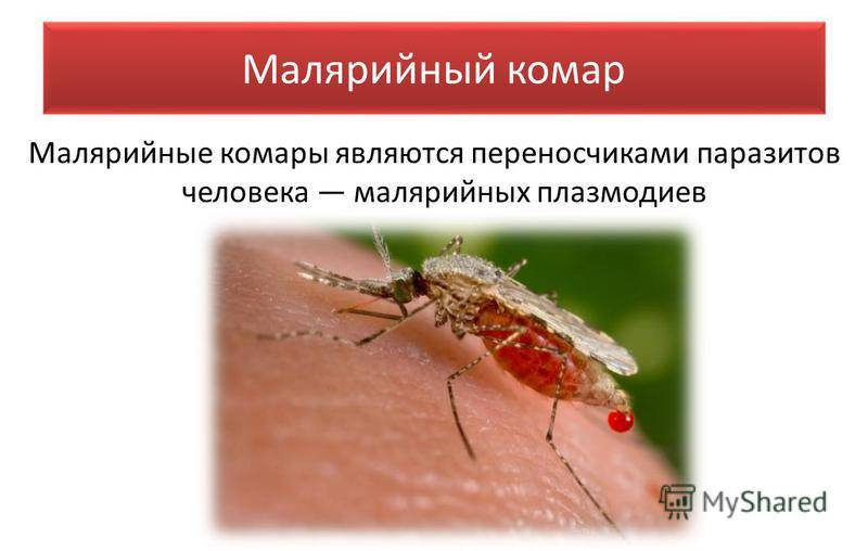 Укус малярийного комара: симптомы, что делать