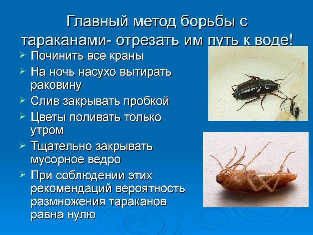 Могут ли тараканы проникнуть в ухо: чем опасна такая ситуация, симптомы и возможный вред, что делать в этом случае русский фермер