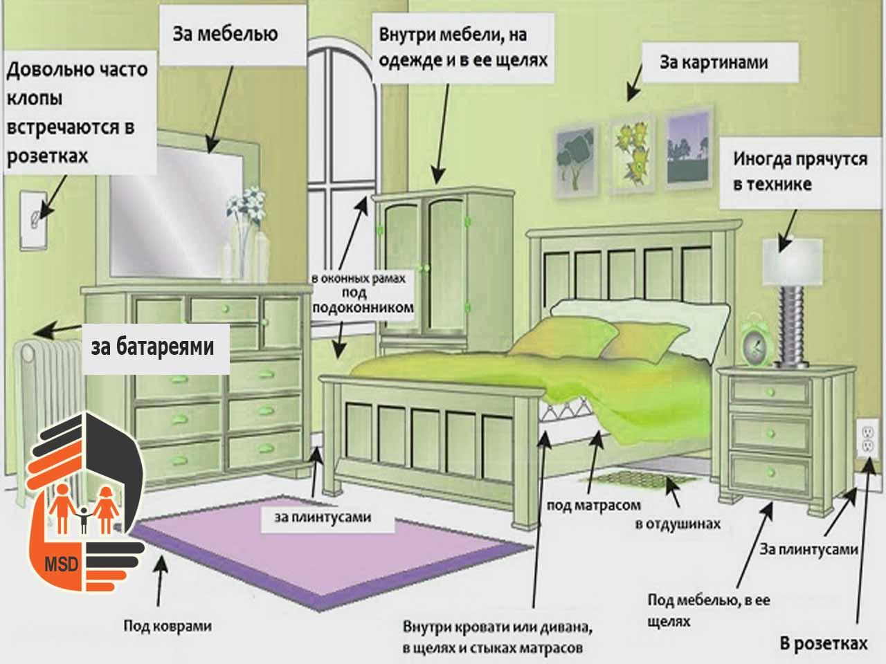 Где прячутся клопы в квартире? как их обнарудить и победить?