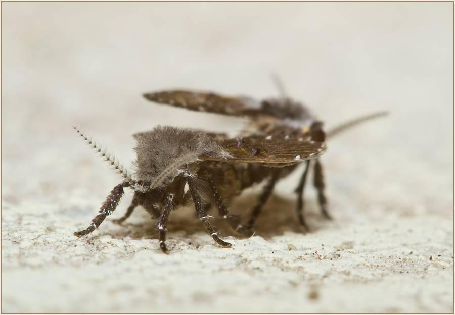 Как избавиться от моли в квартире или доме, различные способы и средства борьбы с бабочками и личинками
