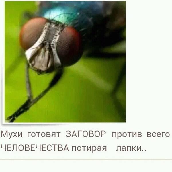 Почему мухи потирают лапки. почему мухи потирают лапкой о лапку сколько дней живет муха