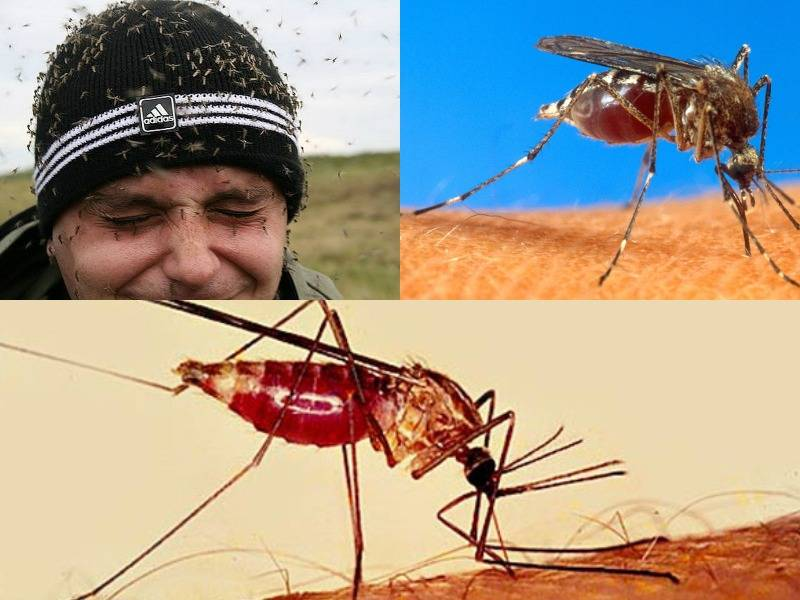 Откуда берутся комары в доме: причины их появления и способы избавления