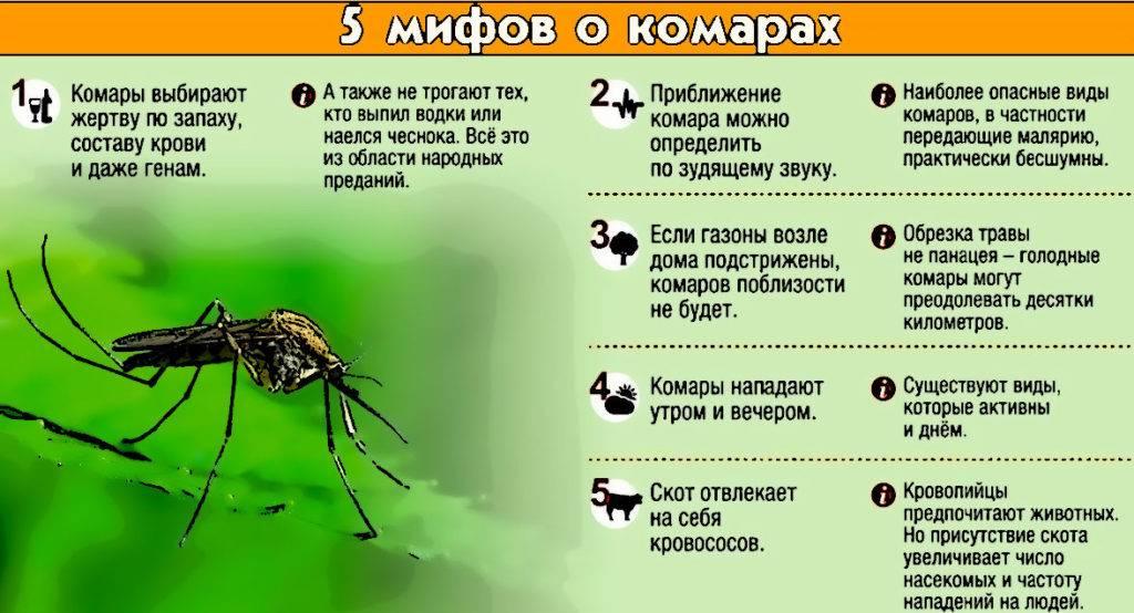 Как избавиться от комаров дома, в квартире: народные средства