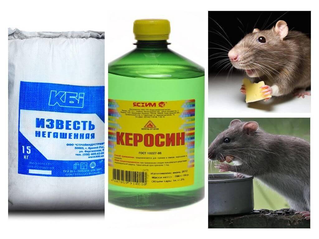 Методы борьбы с крысами в частном доме