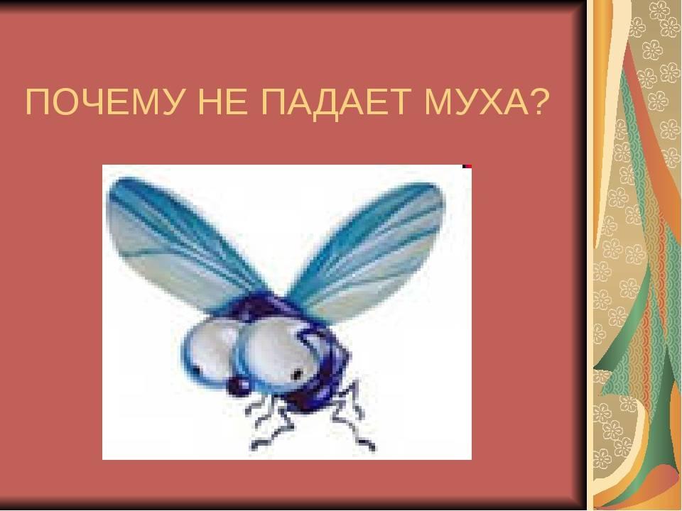 Почемучка: почему муха не падает с потолка?