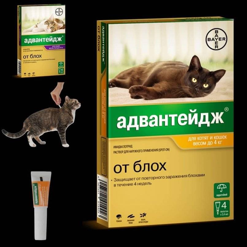 Advantage | капли адвантейдж для кошек и собак | имидаклоприд инструкция, применение