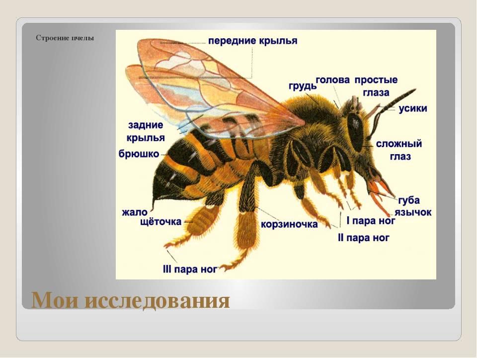 Все о осах: виды и описание