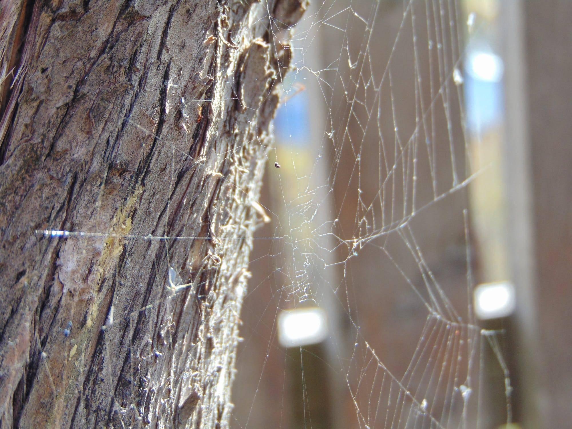 Как избавиться от летучих мышей на балконе: 6 проверенных способов
