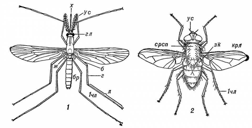 Народная примета «муха»
