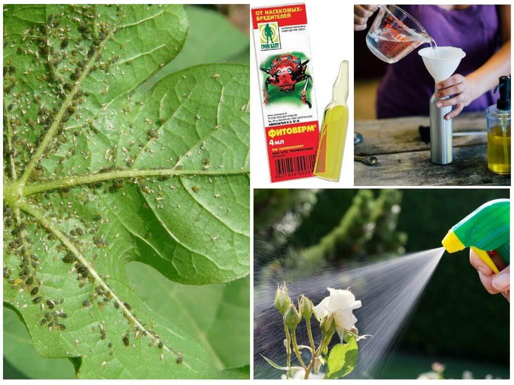 Табак против вредителей сада и огорода: отвары и настои, окуривание и прочее | своими руками – как сделать самому