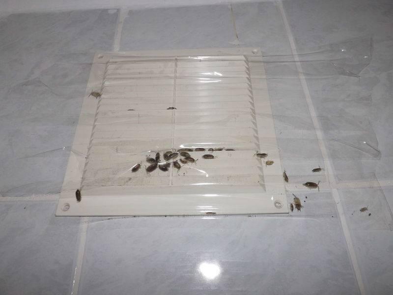 Мокрицы в квартире