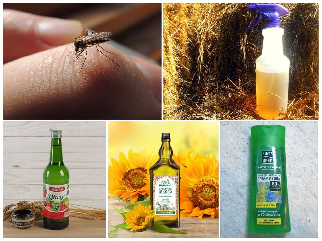Чего боятся комары, как их отпугнуть в домашних условиях