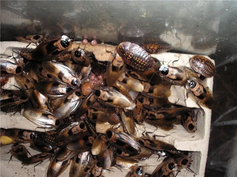 Спреи от тараканов: описание средств, отзывы и инструкция по применению