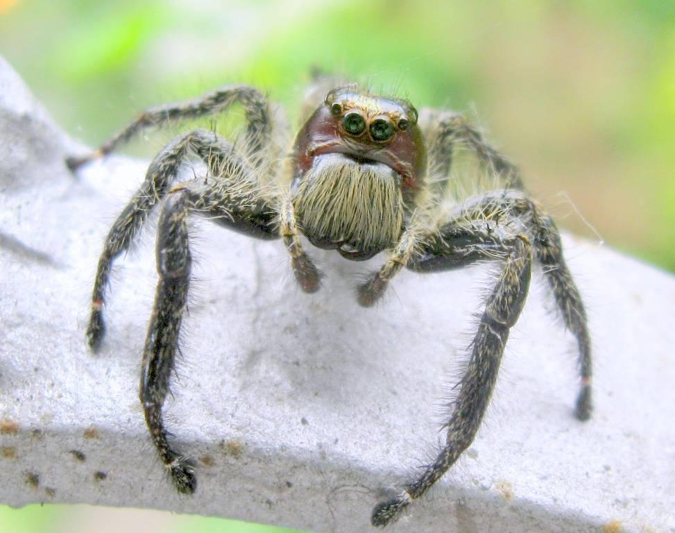 Самые необычные пауки. топ 5 пауков