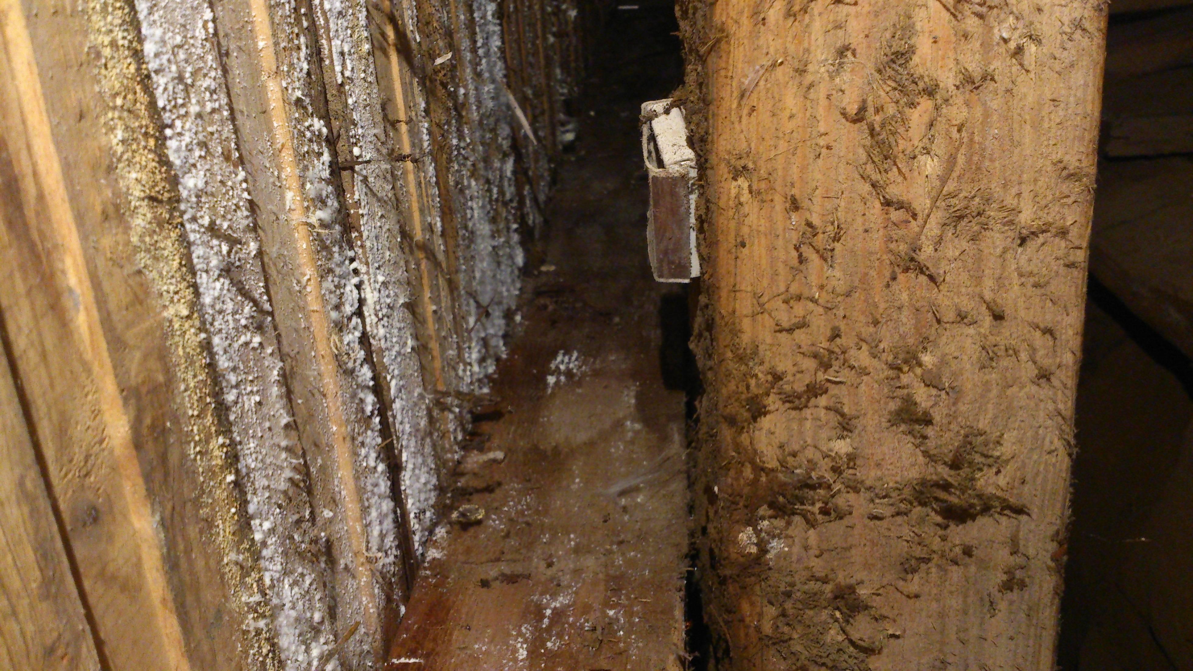Способы избавления от грибка и плесени в подвальных помещениях