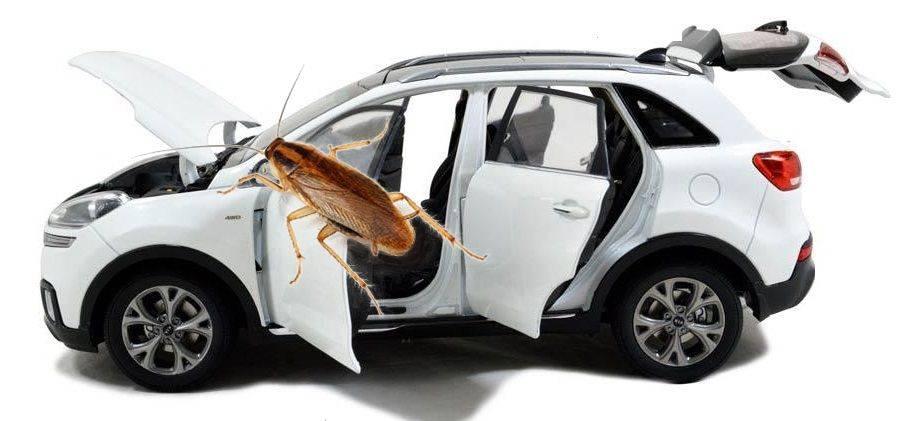 Тараканы завелись в машине, могут ли навредить и как их вывести?