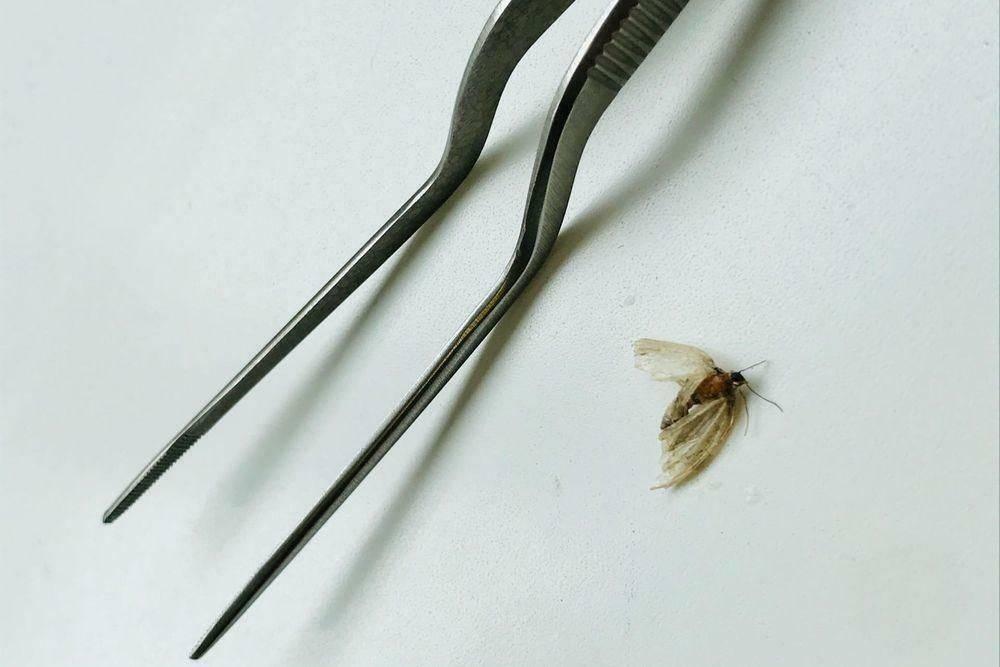 Может ли таракан залезть в ухо и что делать в такой ситуации