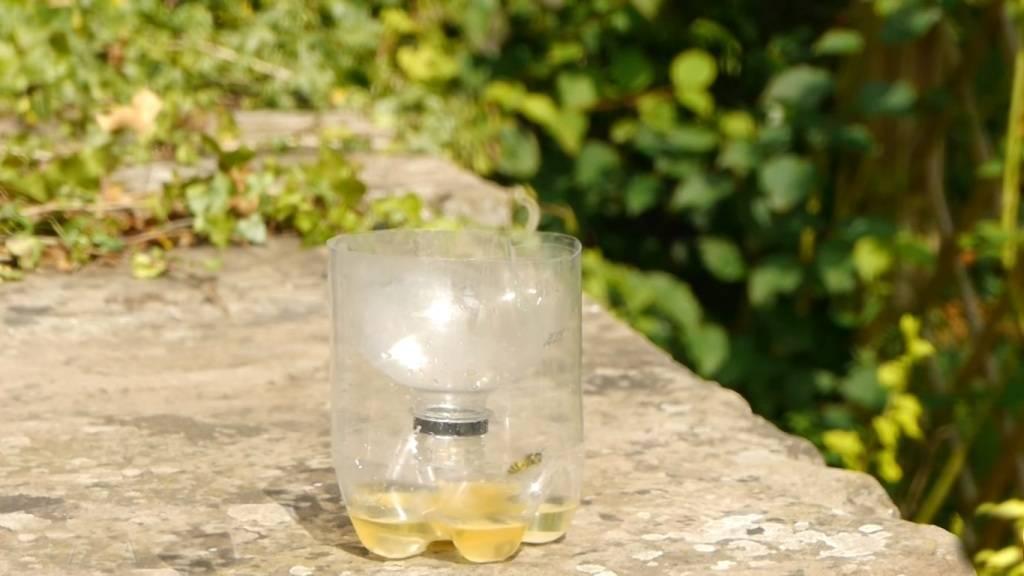 Как сделать ловушку для ос из пластиковой бутылки: простая пошаговая инструкция | (фото & видео)