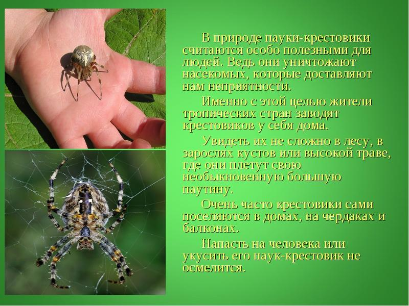 Паук — это насекомое или нет, и почему их выделяют в отдельный класс