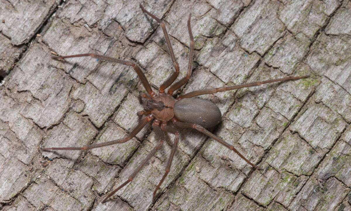 Укус паука: симптомы, первая помощь и лечение