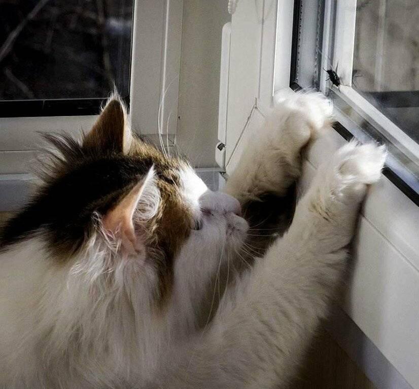 Кот съел отравленную мышь - что делать и как помочь питомцу