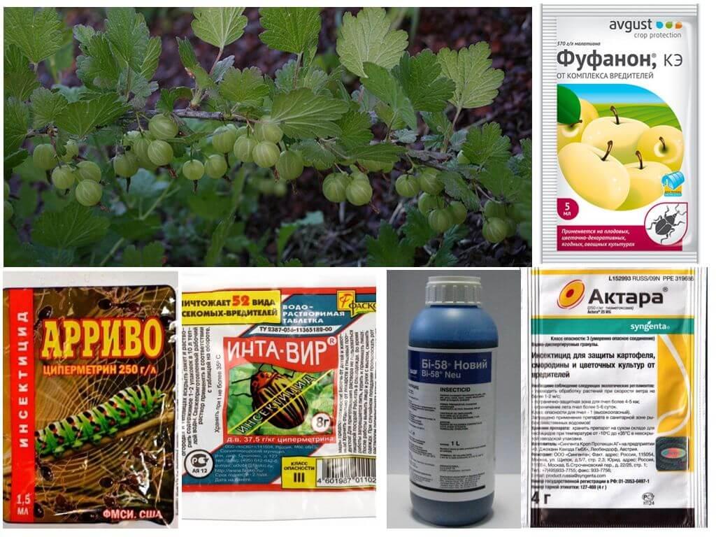 ✅ чем обработать сливу от тли после цветения, после завязи плодов: лучшие средства - tehnomir32.ru