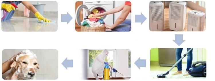 Как избавиться от блох в квартире: методы и средства